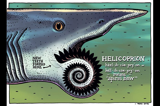 "Center's ""Summer of Sharks"" exhibit. Courtesy Alaska SeaLife Center An illustration of the ancient Helicoprion ""buzz saw"" shark by Alaska artist Ray Troll featured in the show ""Summer of Sharks"" at the SeaLife Center in Seward this summer. Courtesy Ray Troll"