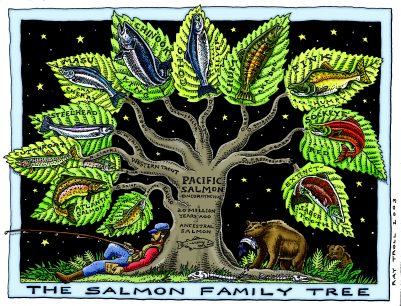 SALMON FAMILY TREE ART POSTER