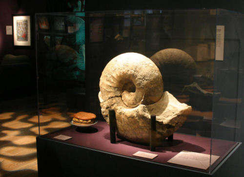 A beautiful ammonite fossil from the Burke's collection and a cheeseburger resting comfortably by it