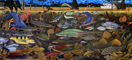 Fishes of Amazonia mural