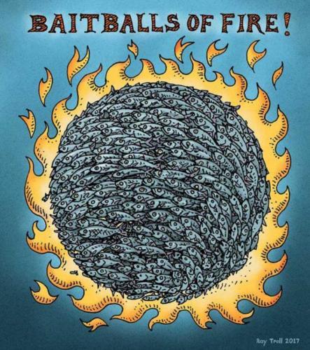Bait Balls of Fire copy 2