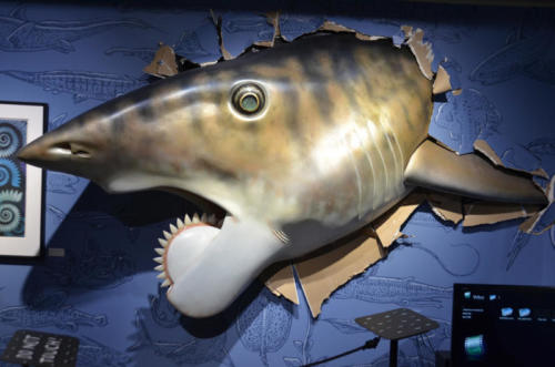 Gary's sculpture of Helicoprion