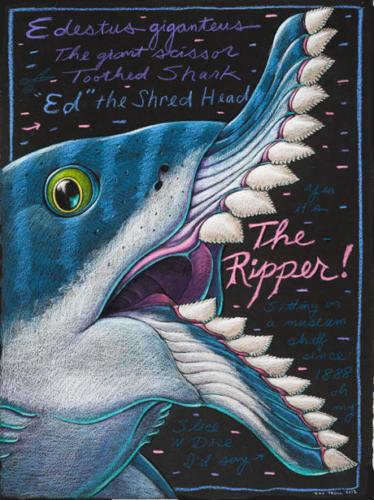 Edestus giganteus, the Ripper!