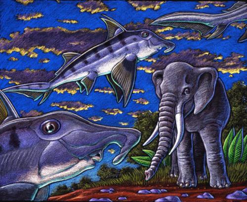 Elephant Fish