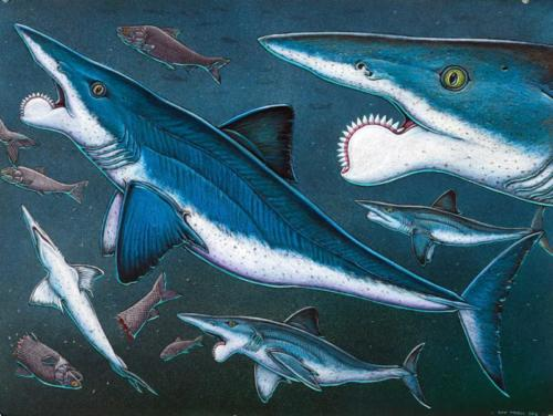 Helicoprion, Almost the Last