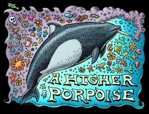 HigherPorpoise