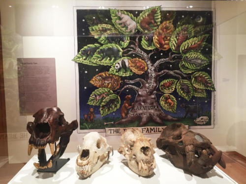 Left to Right: Short faced bear,Kodiak brown bear, steller sea lion, Gomphotaria (4 tusked walrus) and Bear Family Tree