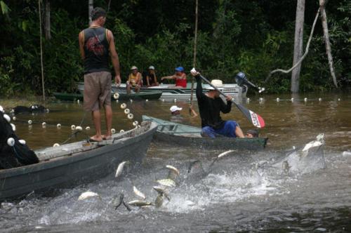 Fish storm!