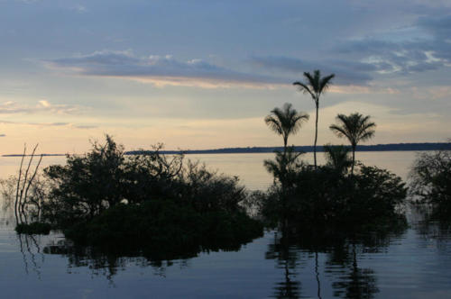 Flooded forest, Rio negro.