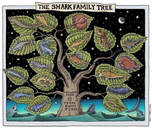 Shark Family Tree 2