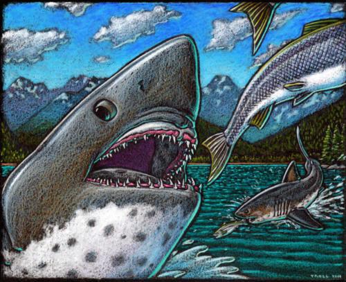 Salmon Sharks