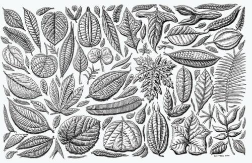 Amazon Leaf Pattern