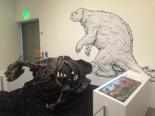 Oakland Museum installation shot with ground sloth sculpture (Paramylodon)