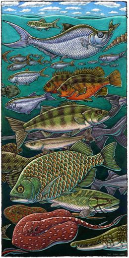 GREEN RIVER FISHES ART POSTER